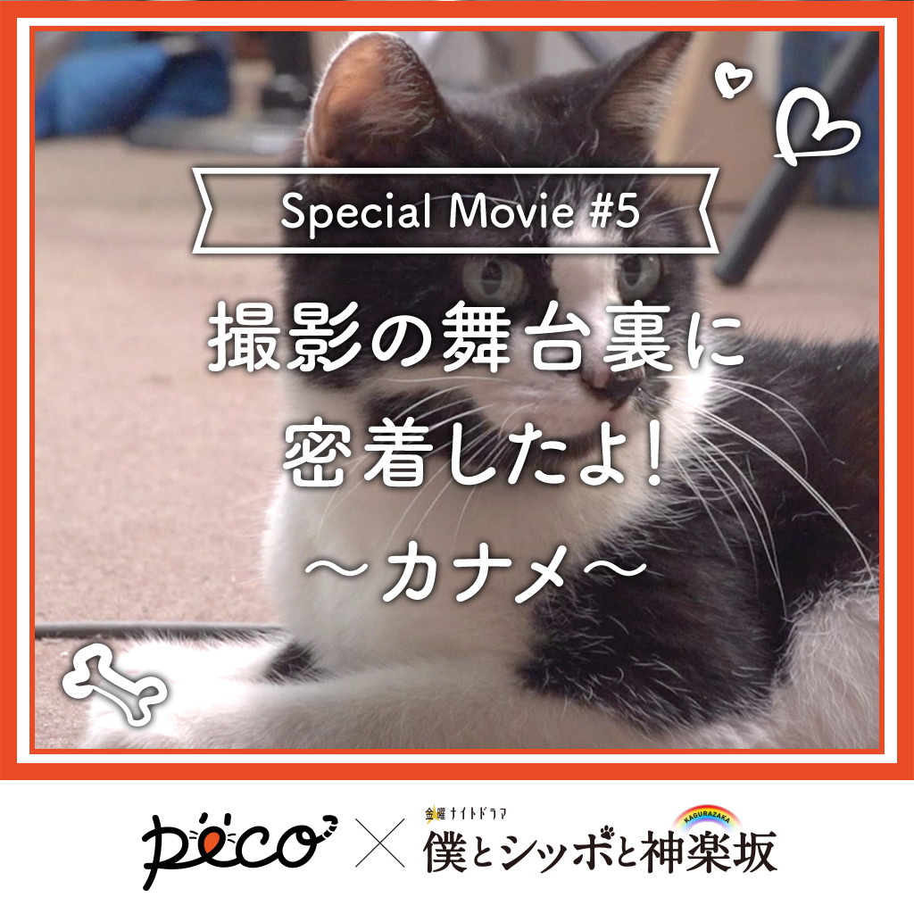 【PECO僕坂 #5】撮影の舞台裏に密着!〜カナメ〜 Sponsored by テレビ朝日