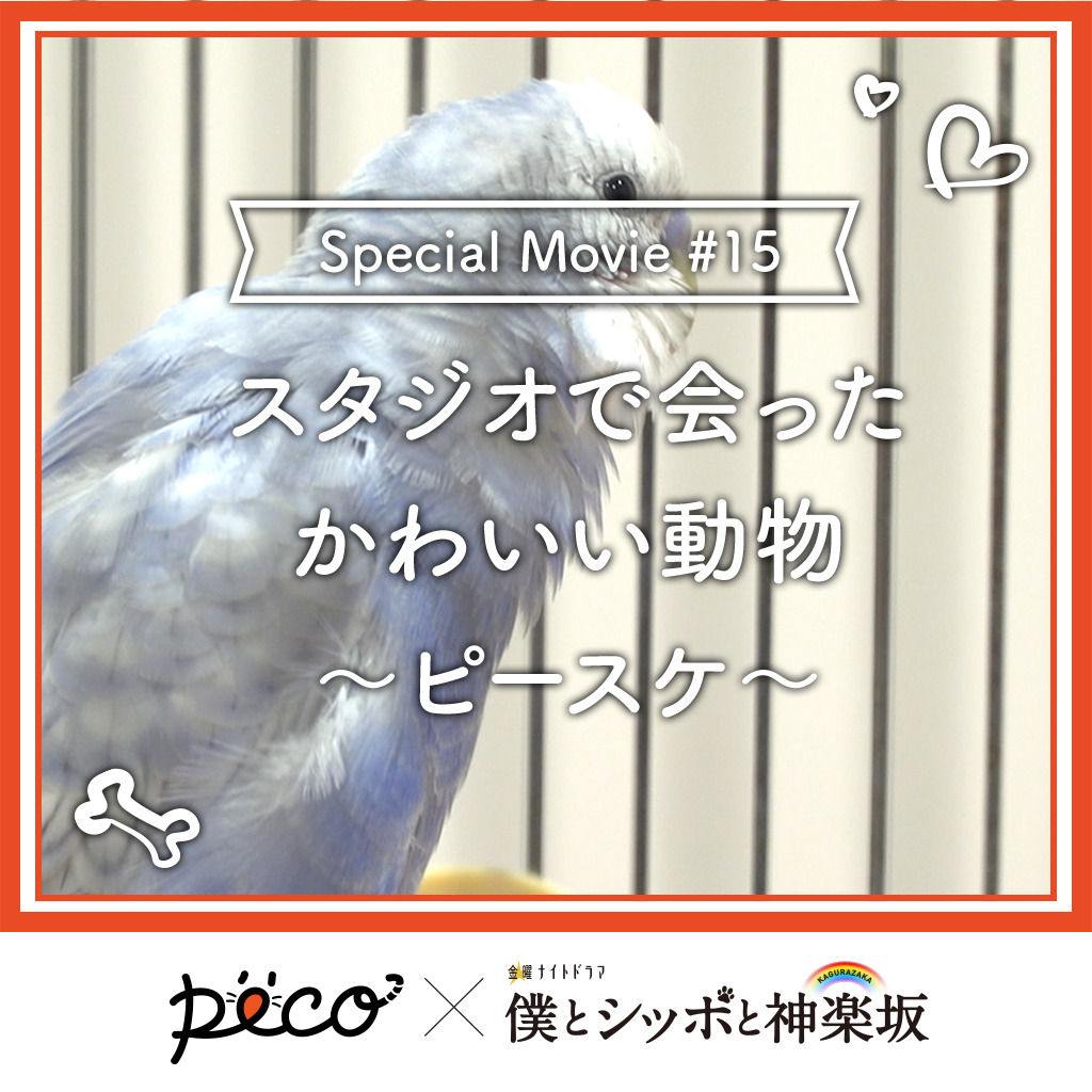 【PECO僕坂 #15】スタジオで会った動物 〜ピースケ〜 Sponsored by テレビ朝日