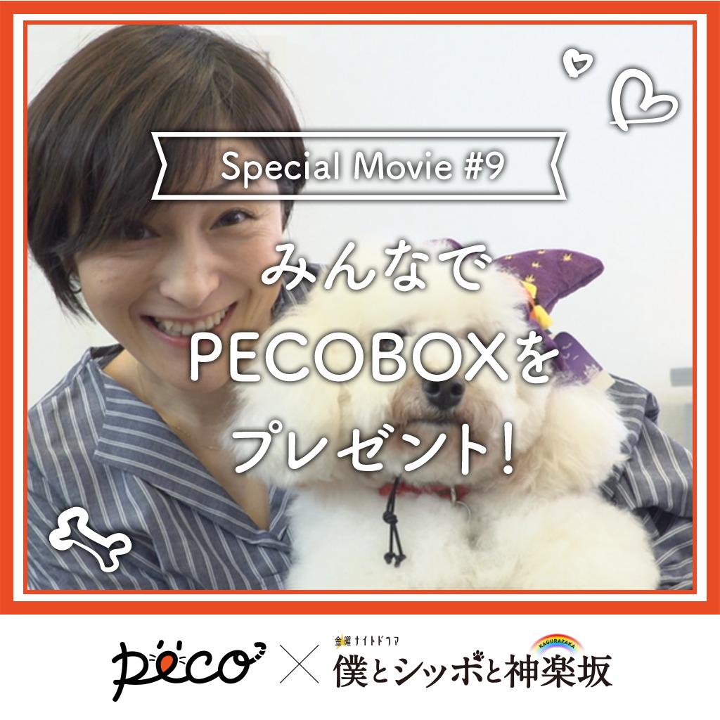 【PECO僕坂 #9】みんなでPECOBOXをプレゼント♪ Sponsored by テレビ朝日