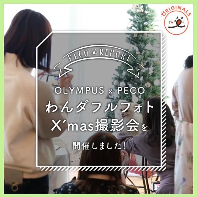 OLYMPUS×PECO わんダフルフォトX'mas撮影会を開催しました🎄✨