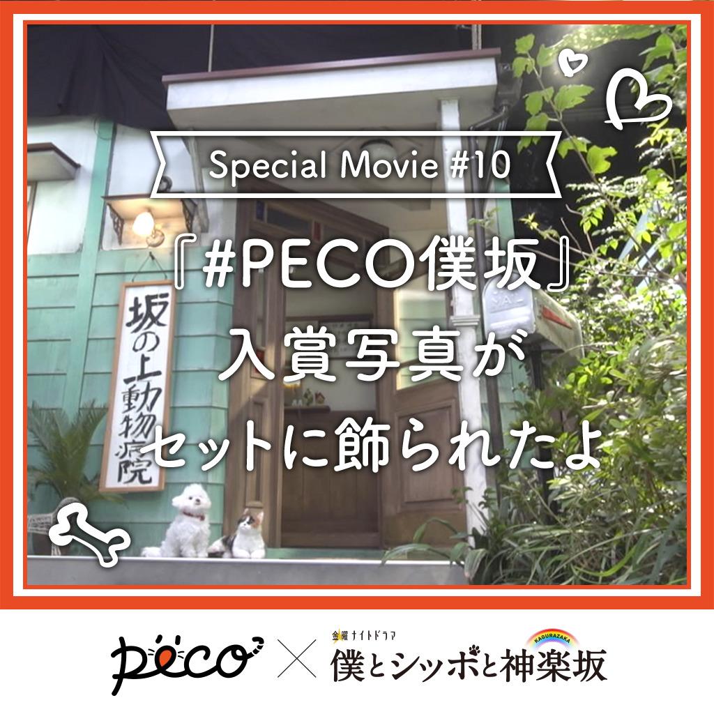 【PECO僕坂 #10】キャンペーン入賞写真が飾られました♪  Sponsored by テレビ朝日