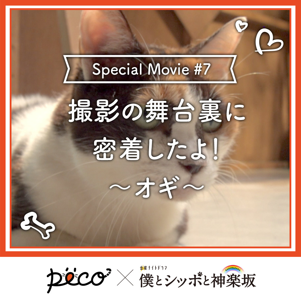 【PECO僕坂 #7】撮影の舞台裏に密着!〜オギ〜 Sponsored by テレビ朝日