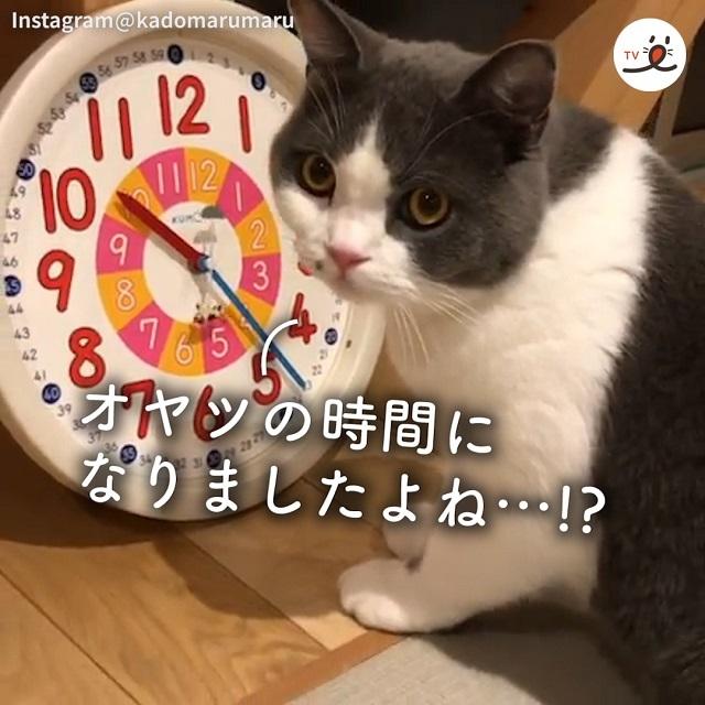 「今何時…?⏰」おやつ欲しさに、裏技を使おうとしたニャンコだけど…😹💕