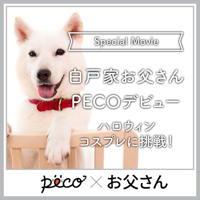 ついに、白戸家お父さんがPECOデビュー![Sponsored by ソフトバンク]