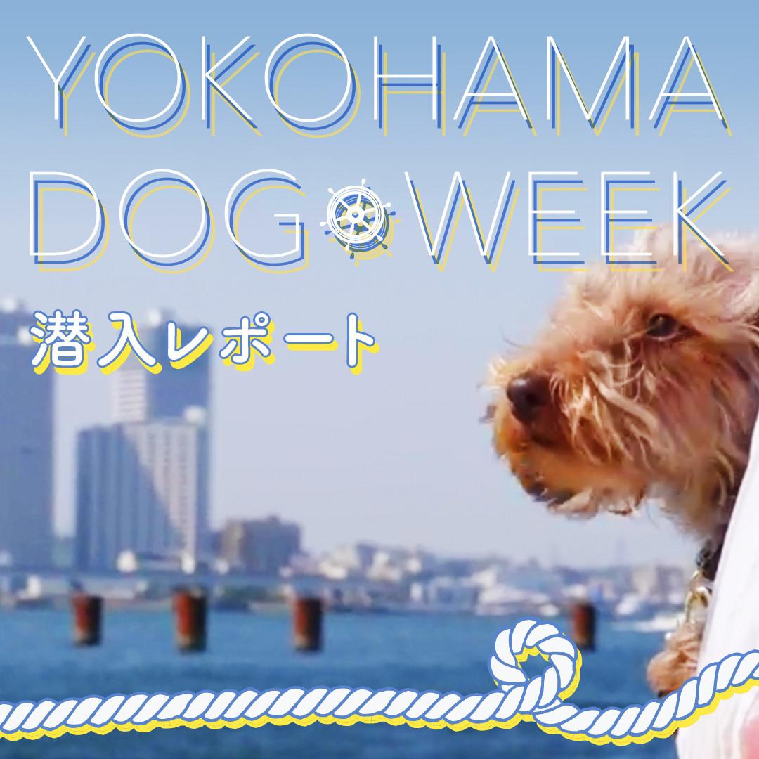 横浜ドッグウィーク、最終日の様子を潜入取材してきました♪