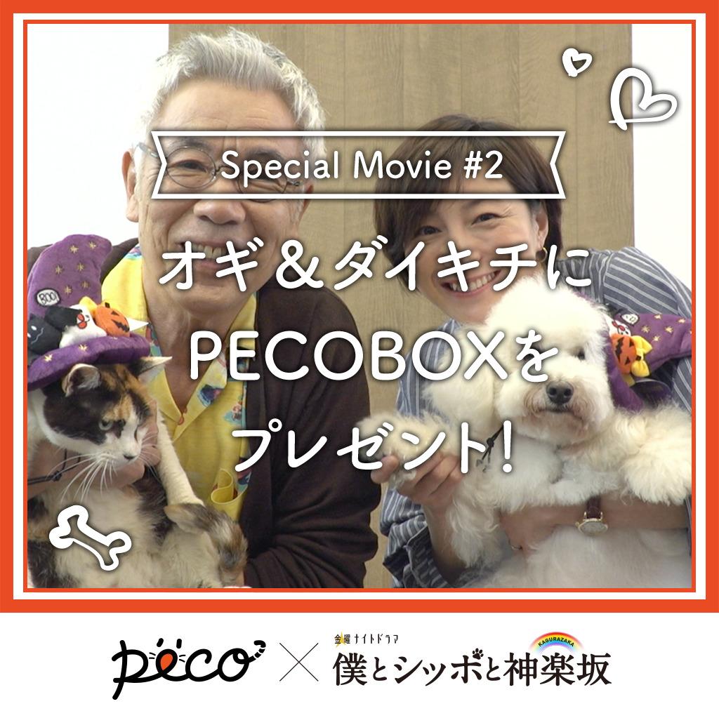 【PECO僕坂 #2】PECOBOXをプレゼント✨ Sponsored by テレビ朝日