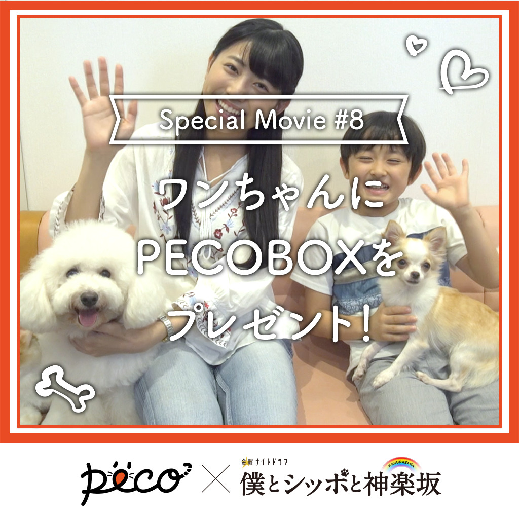 【PECO僕坂 #8】PECOBOXをプレゼント♪  Sponsored by テレビ朝日