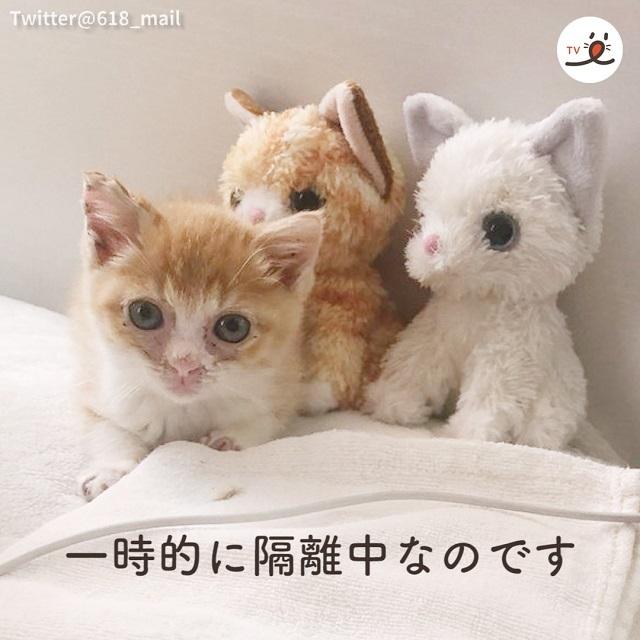 ヌイグルミが友達 → 新しい家族と出会った元野良猫🐈温かな関係が育っていく🌱