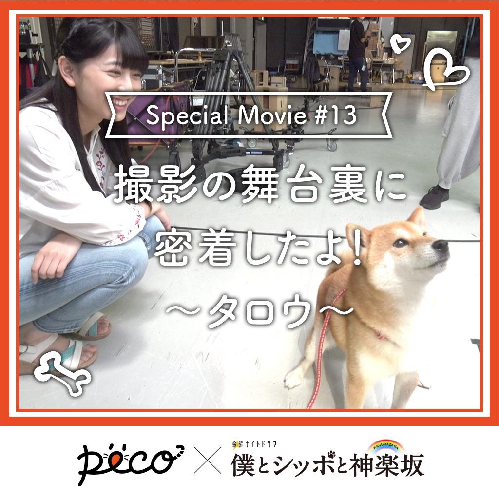 【PECO僕坂 #13】撮影の舞台裏に密着!〜タロウ〜 Sponsored by テレビ朝日