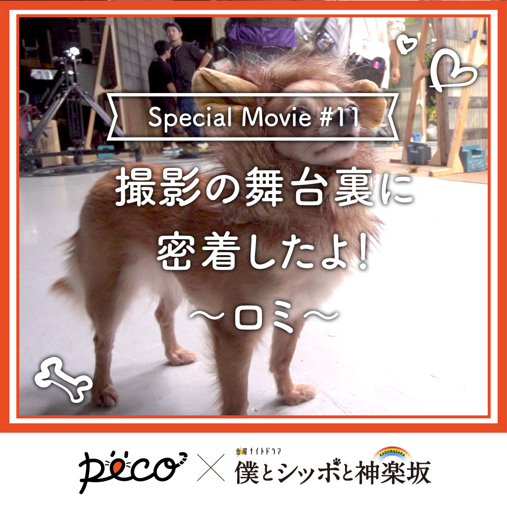 【PECO僕坂 #11】撮影の舞台裏に密着!〜ロミ〜 Sponsored by テレビ朝日