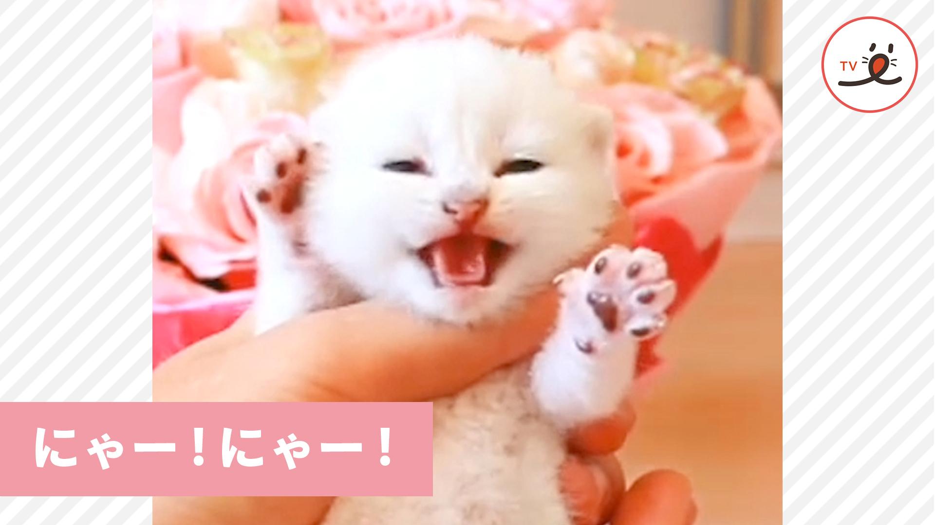 にゃーにゃー!と泣きやまない子猫ちゃん😿 すると、先輩猫がやってきて
