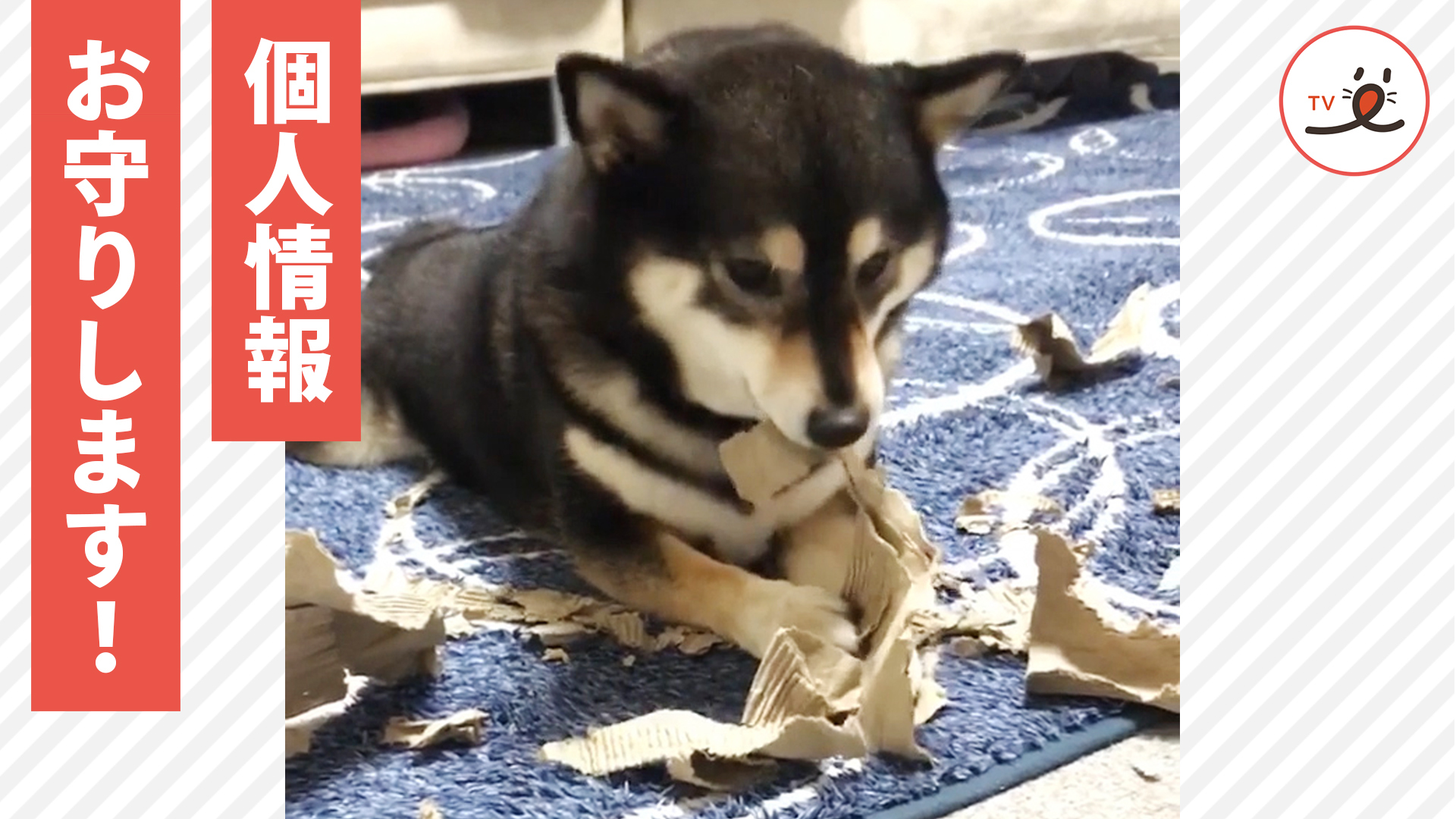 「秘密は守ります!」 柴犬シュレッダーで個人情報は抹消🐕✨