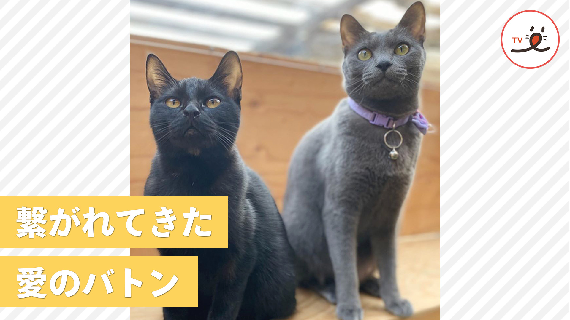たくさんの愛と思い出を胸に…😌 新たな2匹が加わった保護猫大家族の愛の物語🏠