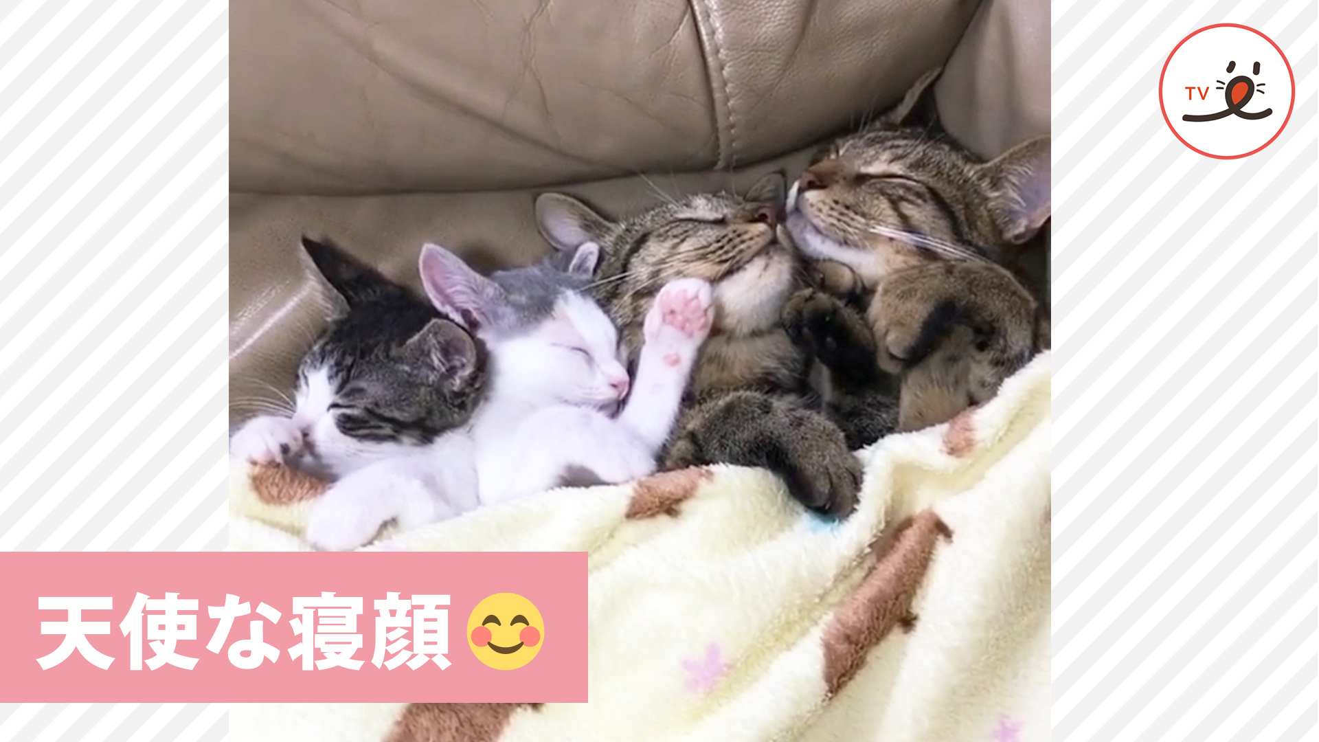 見ていたら思わず笑みが溢れる😳 ニャンコ4匹の寝顔💕