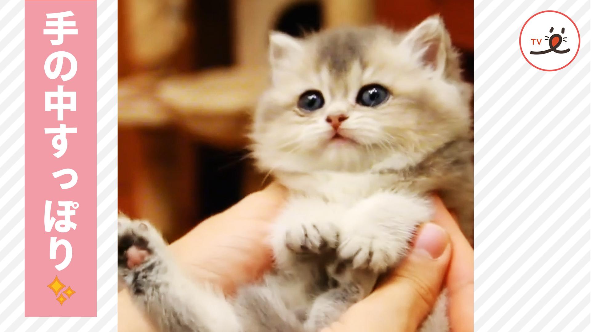 手のひらにすっぽり収まる子猫ちゃん💕 抱っこをされてウットリ😻