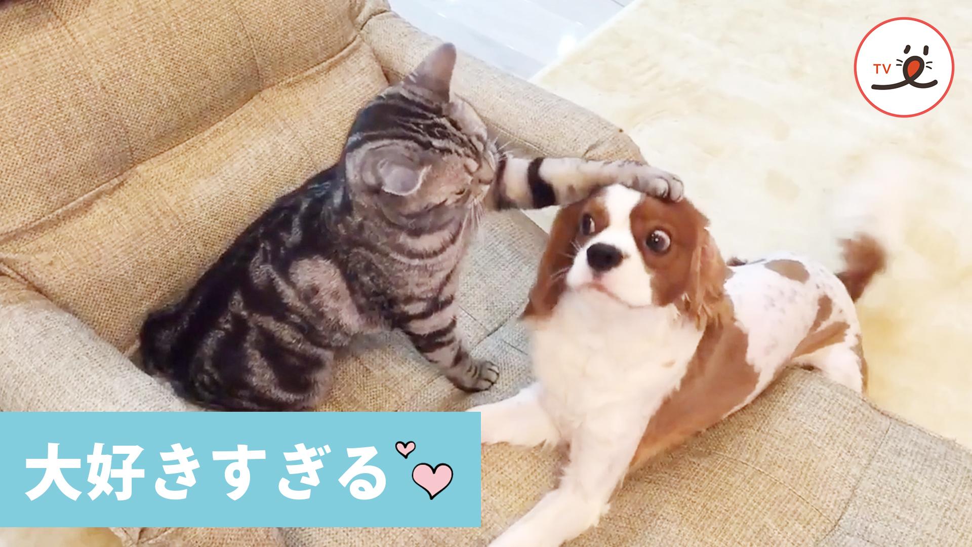 愛に生きるワンコ❤️ ニャンコに噛まれても、猫パンチされても、嬉しくて尻尾フリフリしちゃう🐶