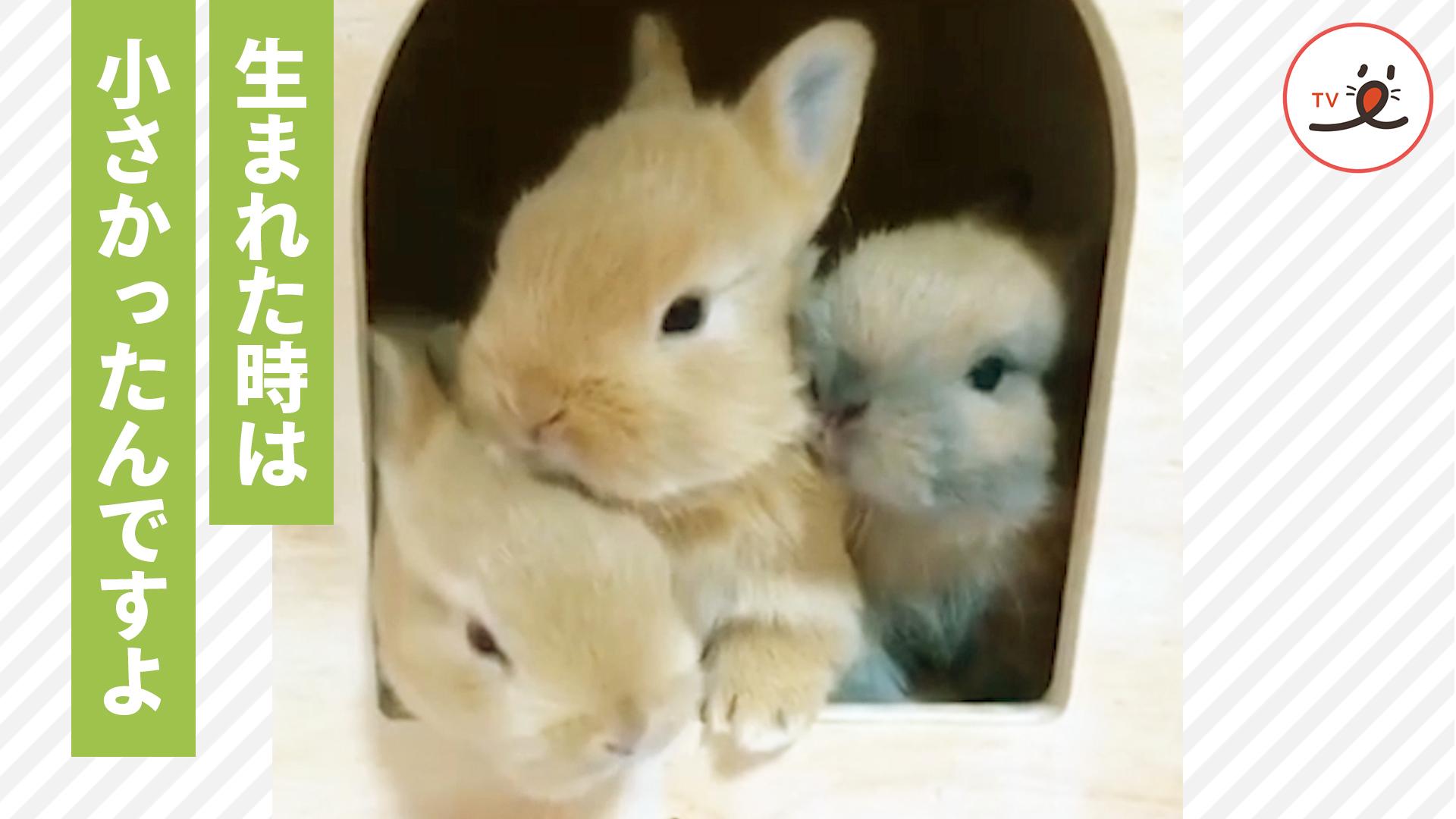 赤ちゃんから子ウサギになるまでの20日間の成長記録