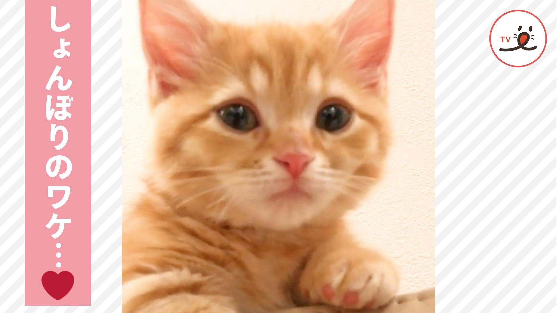 """困り顔? しょんぼり顔? """"子ネコの悩み""""が可愛すぎた…❤️"""