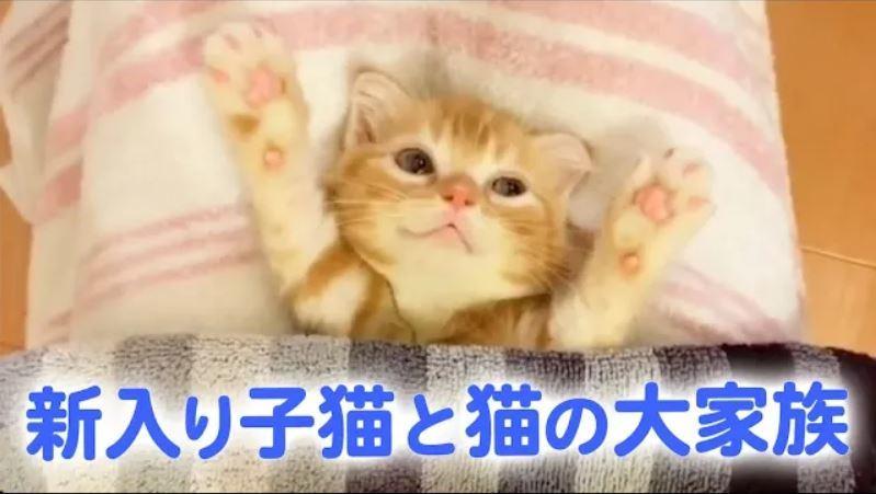 6匹の猫たちの大家族♡ 新しくやってきた子猫を迎える、先輩たちの優しさ