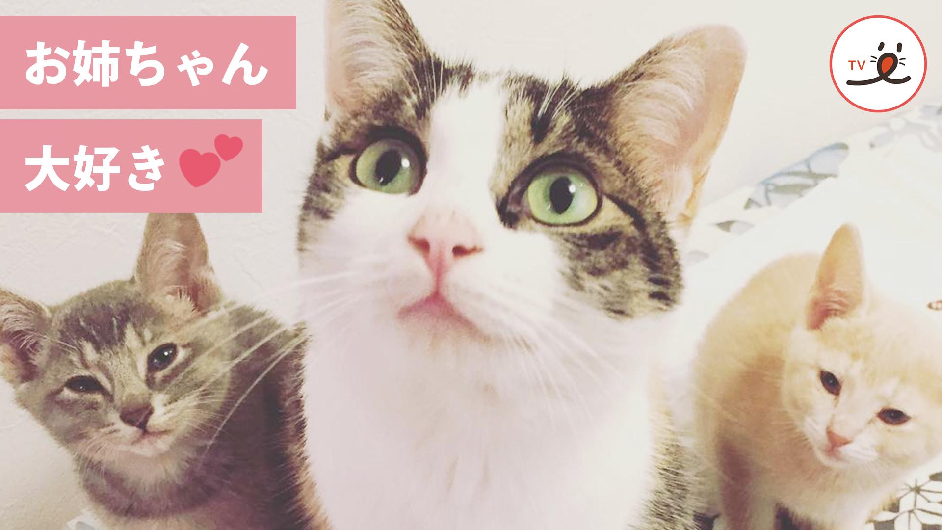 ツンデレ猫のお姉ちゃんと、兄弟猫の甘酸っぱ〜い日々😻