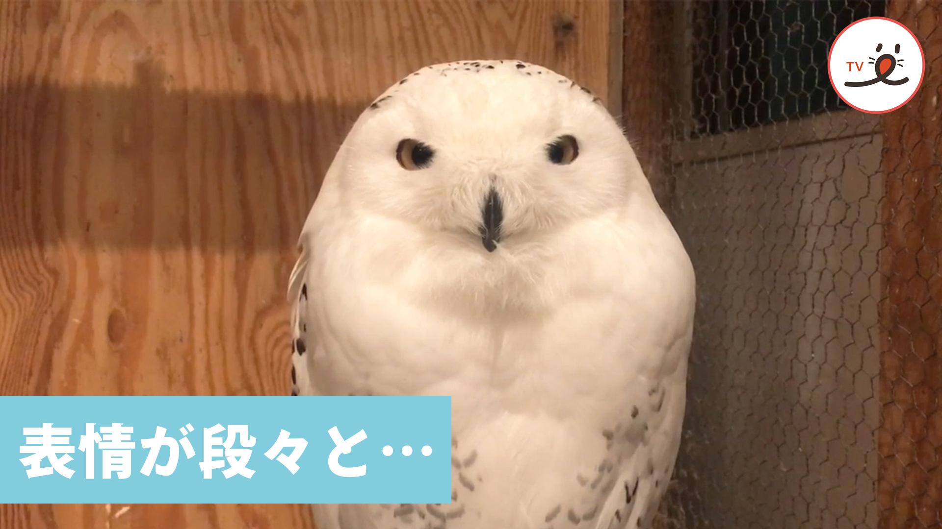 じわ〜っと表情が変化するフクロウさんに注目!✨