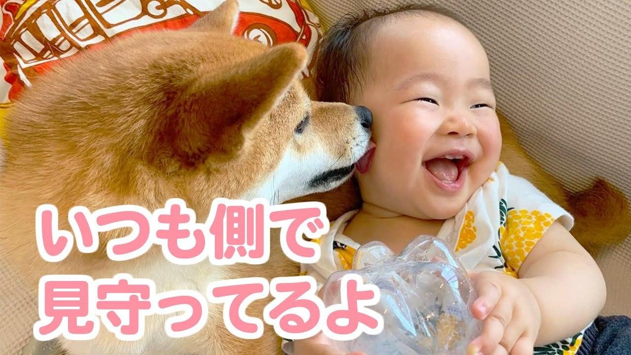 初めて出会った赤ちゃんにビックリしていた柴犬が子どもの成長を見守る優しいお姉さん犬に成長したおはなし