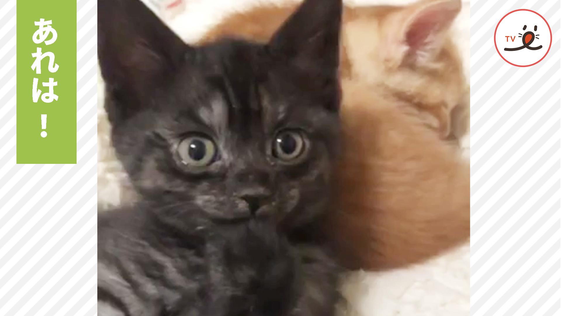 子猫が驚きの表情で見つめる先には…何があるでしょうか⁈🤣✨