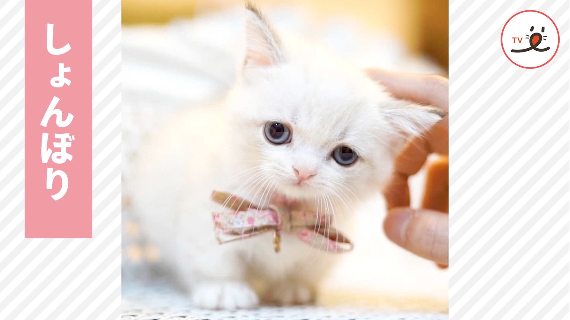 愛くるしい表情に注目💕 天使のような甘えん坊子猫🐱💕