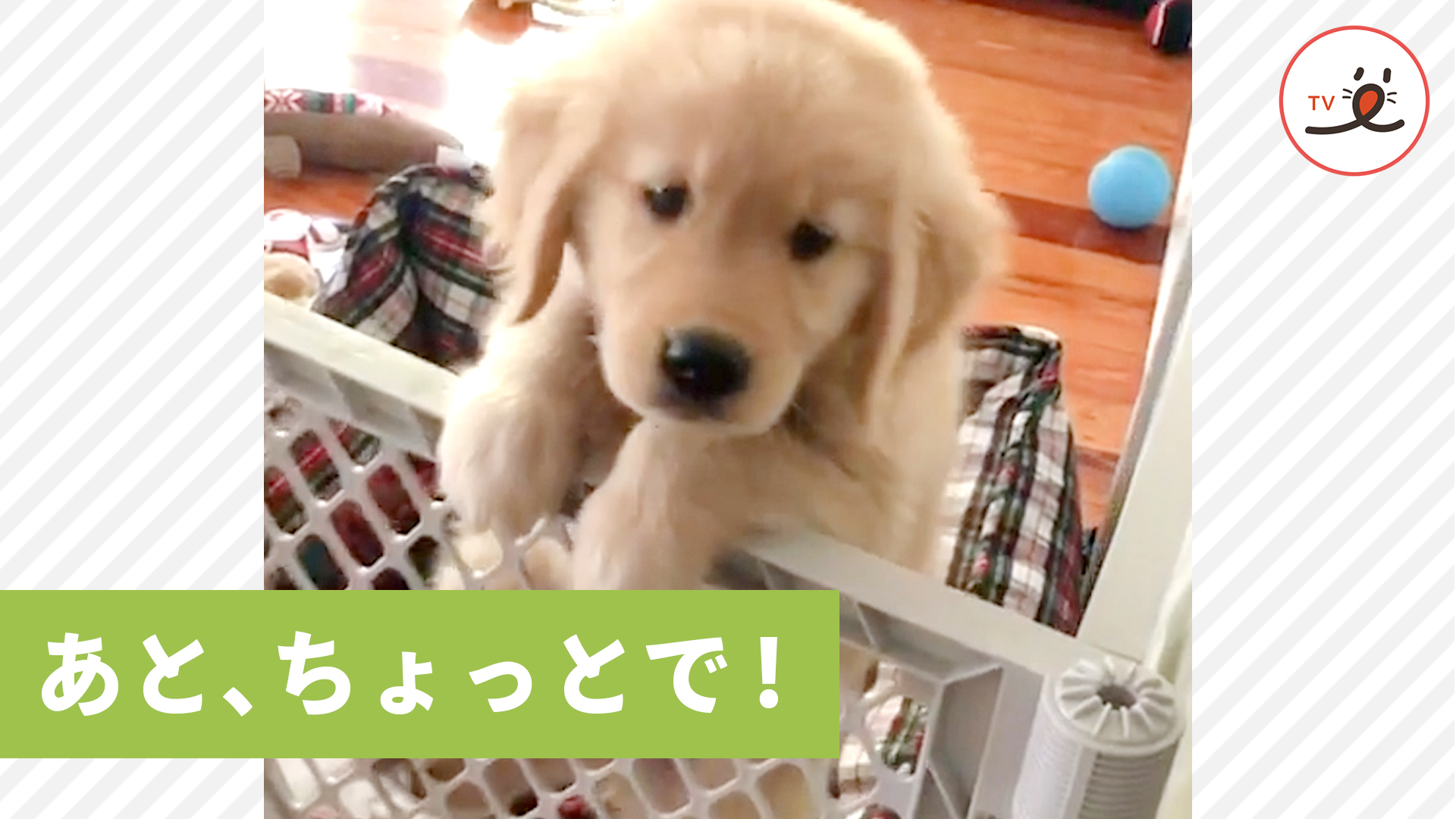 ヨジヨジと登る可愛い子犬ちゃん💕 飼い主さんのところに行きたくて頑張ったけど…