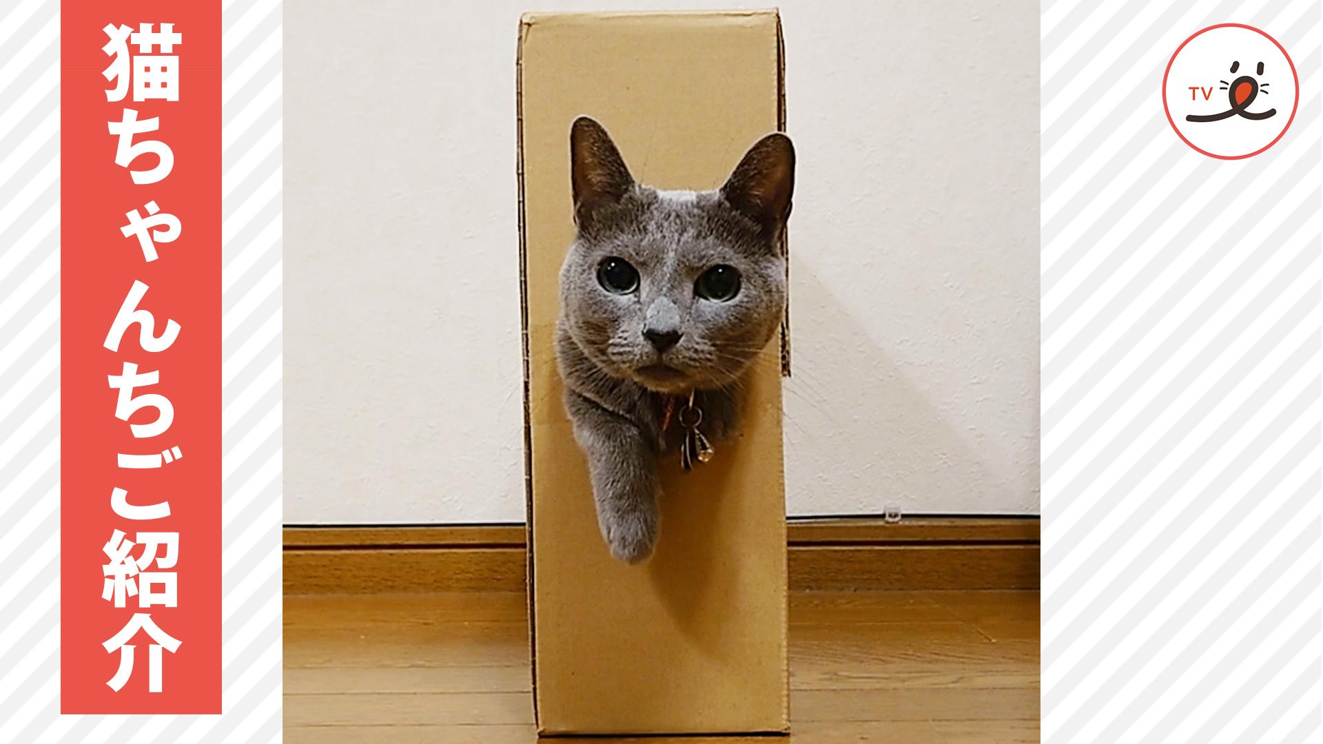 「私のお城へようこそ💓」 猫ちゃんのご自宅紹介🏠☺️