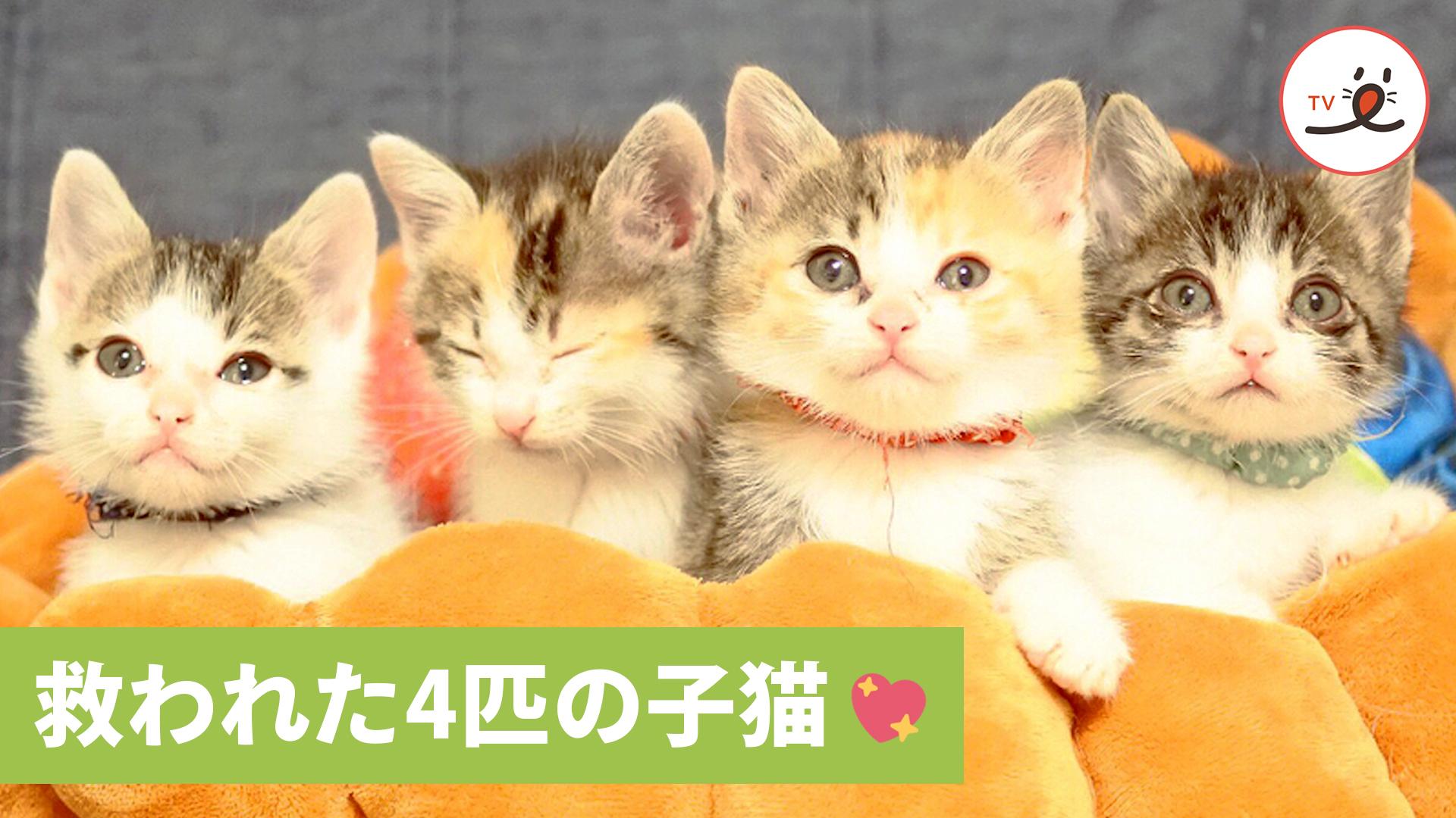 大雨の中、保護された4匹の子猫☔️ 6匹の先住ネコに愛を注がれて💖