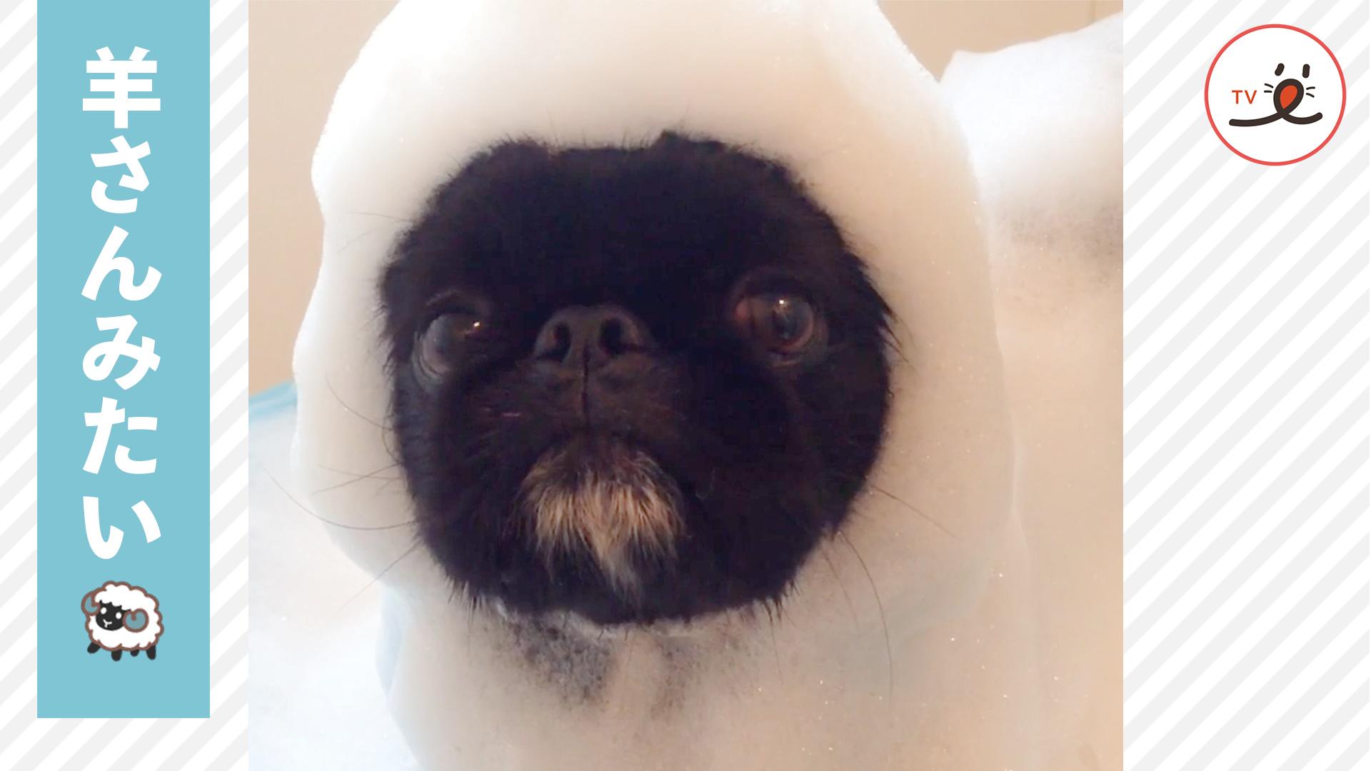 シャワータイムで泡まみれになったワンコ🐶 その姿はまるで…💕