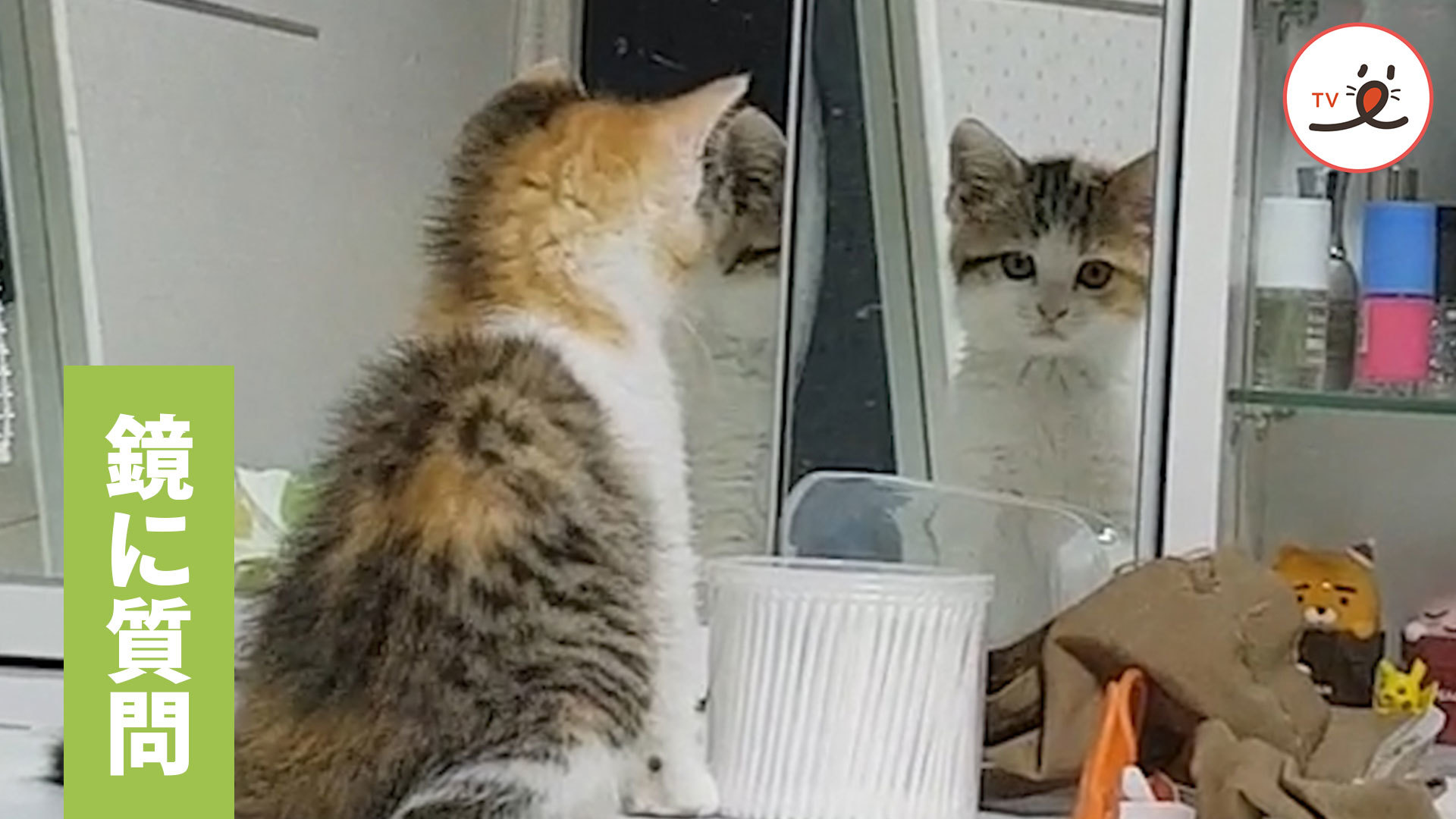 鏡よ鏡よ鏡さん…子猫の質問に、鏡は答えてくれるのでしょうか?🐱💕