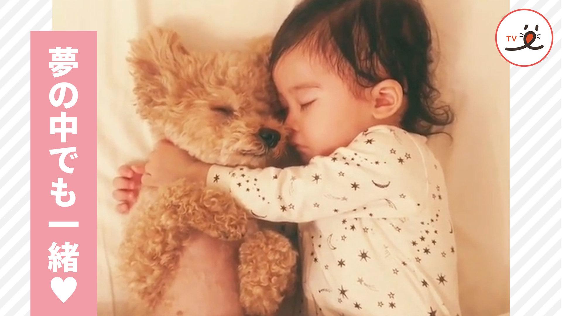 天使すぎる寝姿👼✨ トイプードルと赤ちゃんの仲良し姉妹の日々💕