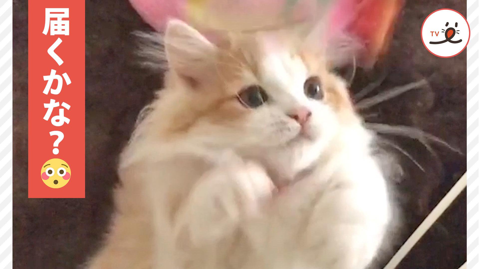 「ていてい!」🐱💦 前脚を一生懸命伸ばす姿が愛らしい猫ちゃん😍