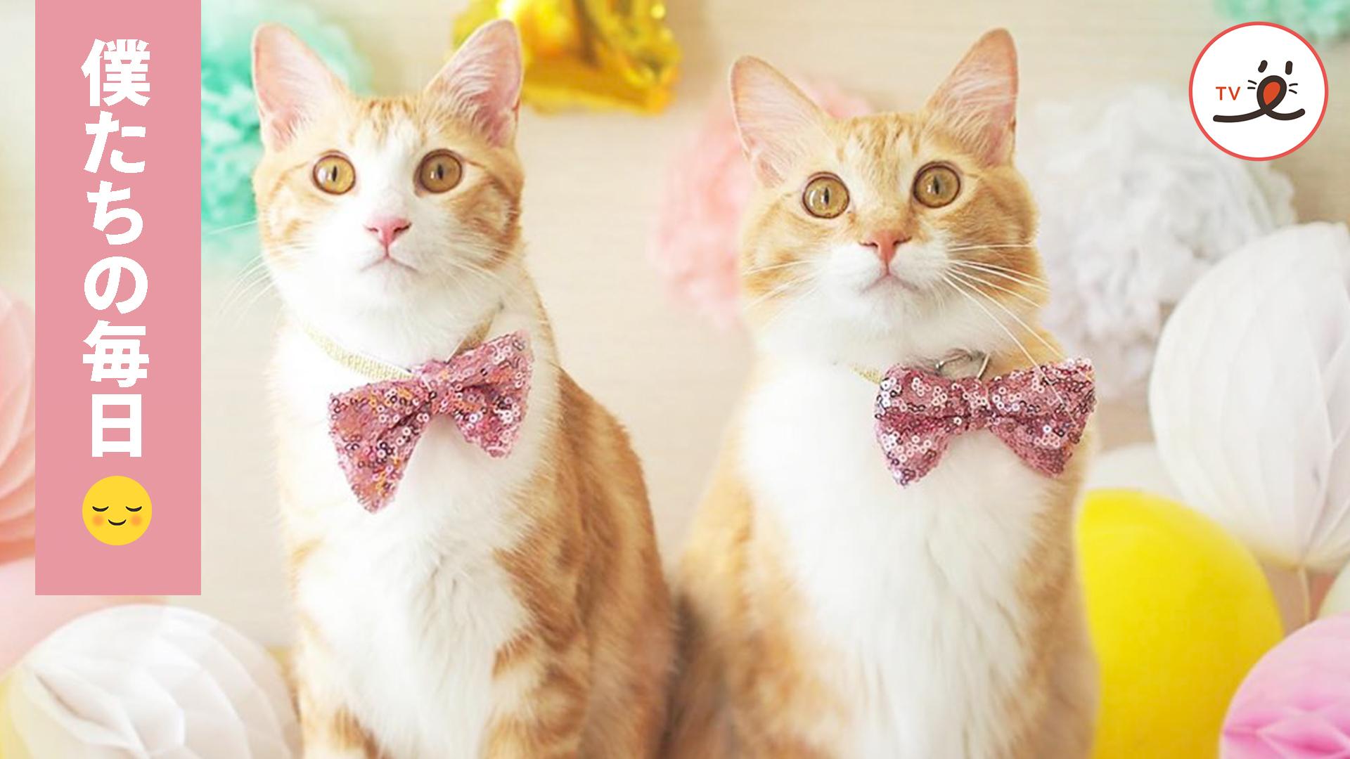 どんな時でも一緒にいるよ✨ 保護猫兄弟の心温まる毎日☺️🌼