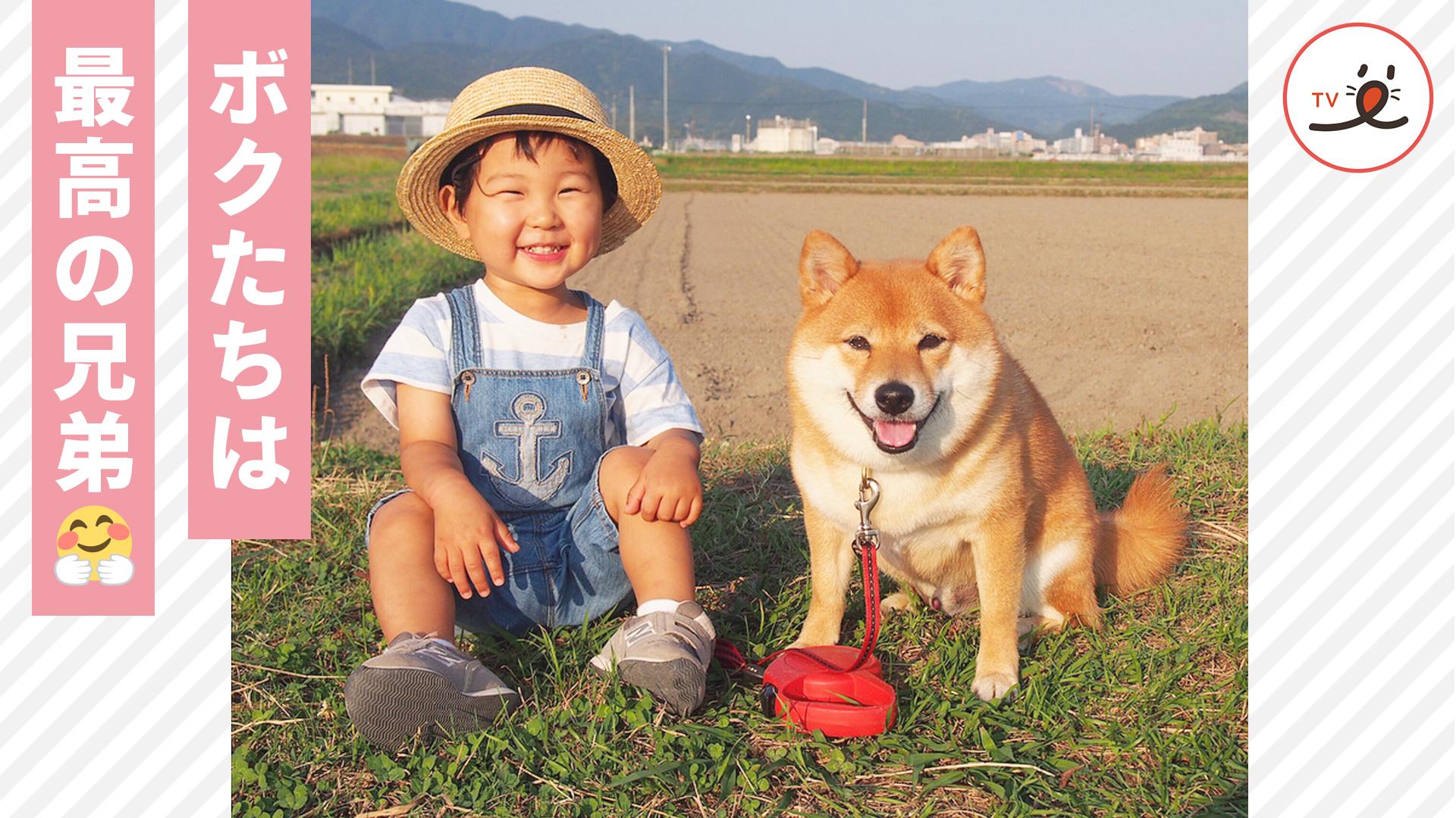 ボクがお兄ちゃんだよ🐕 赤ちゃんと柴犬のほのぼの成長記録