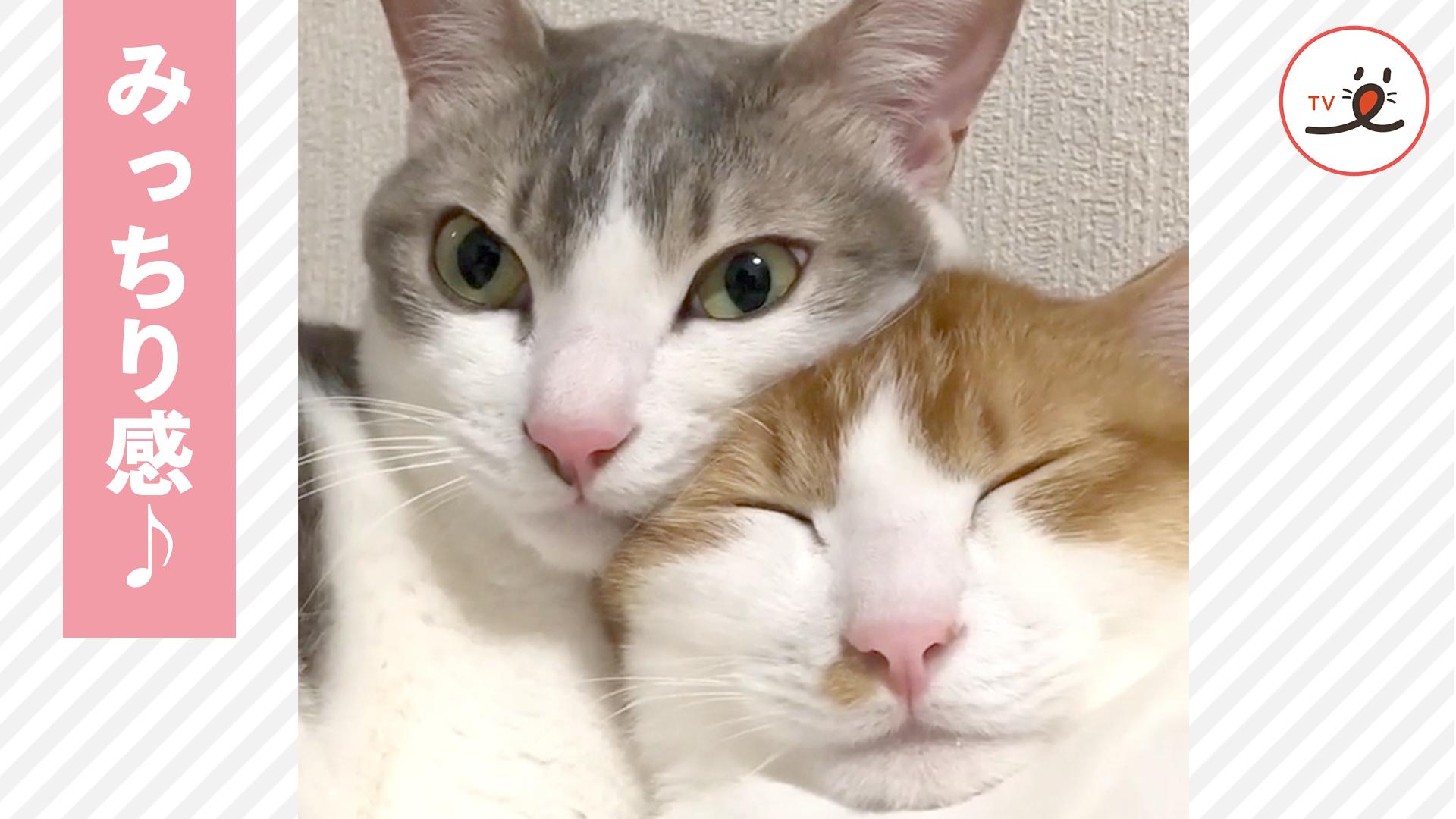 """1ミリも隙間がないくらい""""みっちり💕 仲良く寄り添う双子猫🐈 🐈"""