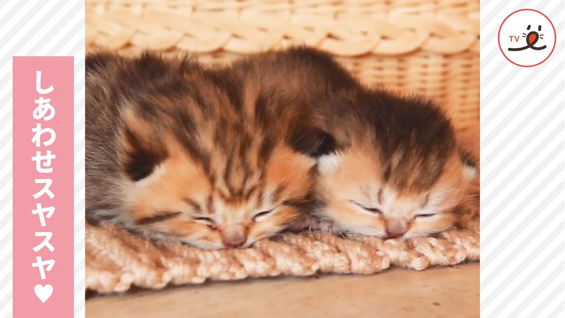 寄り添って眠る2匹の子猫ちゃん🐱❤️🐱 最高に幸せな寝顔だね🌟
