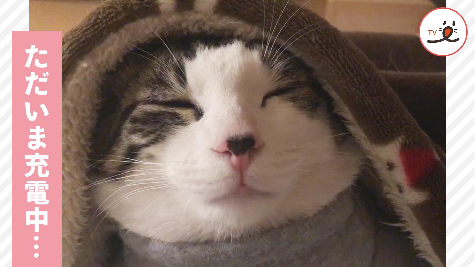スリープモードにゃ…😴 お疲れの猫さん、毛布をかぶって充電中…♡