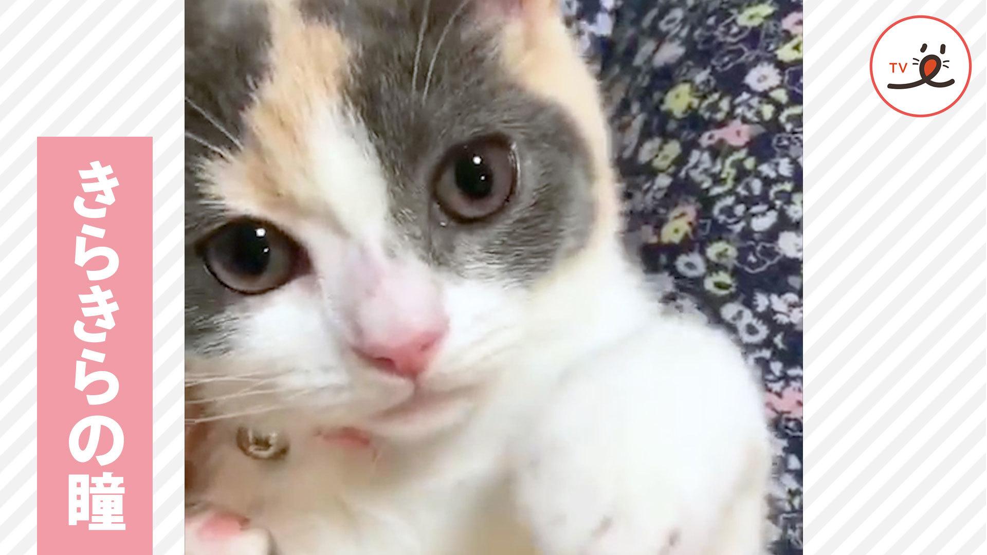 きらきら、うるうる✨ ニャンコの瞳って、なんでこんなに綺麗なの🌟❓
