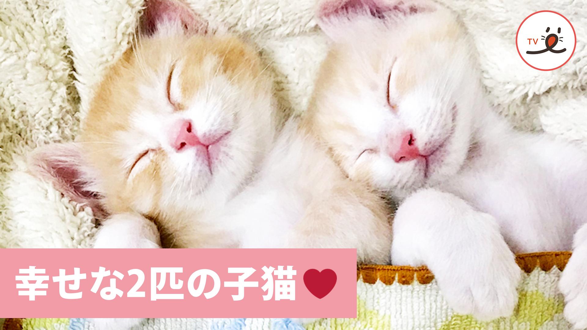 2匹の子猫を迎えました🐱 7匹の保護猫たちの新たな物語❤️