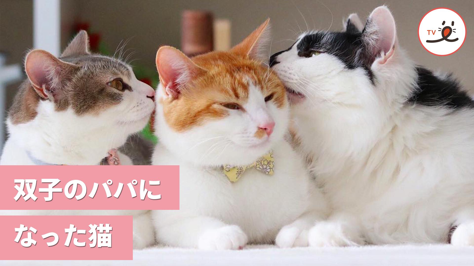 今日からぼくがパパになる! 双子の保護猫を育てたお兄ちゃん猫😻