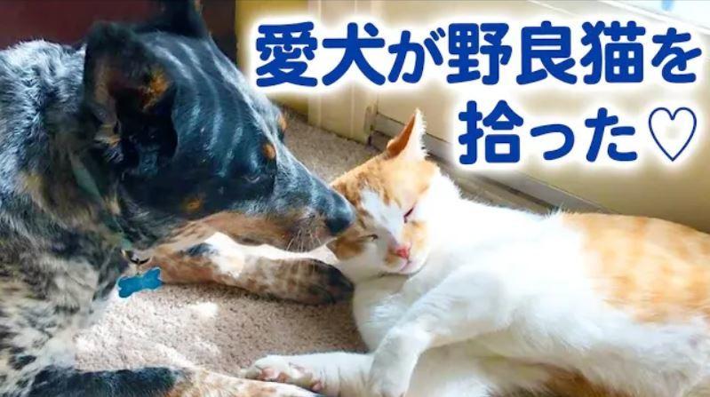 裏庭に現れた野良猫。友だちになったのは、臆病だった元保護犬でした♡