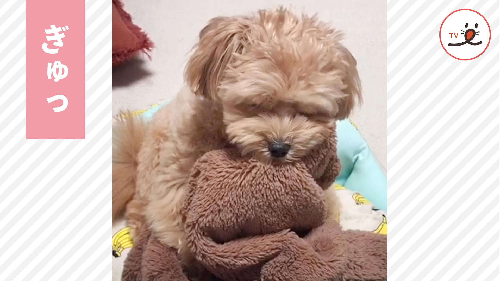 毛布をぎゅっと抱えて寝そうになるワンコが可愛すぎる😍🐶