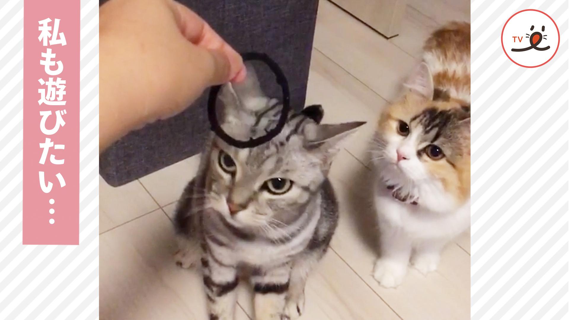 兄猫が遊んでいたら、妹猫がやってきて…☺️☺️