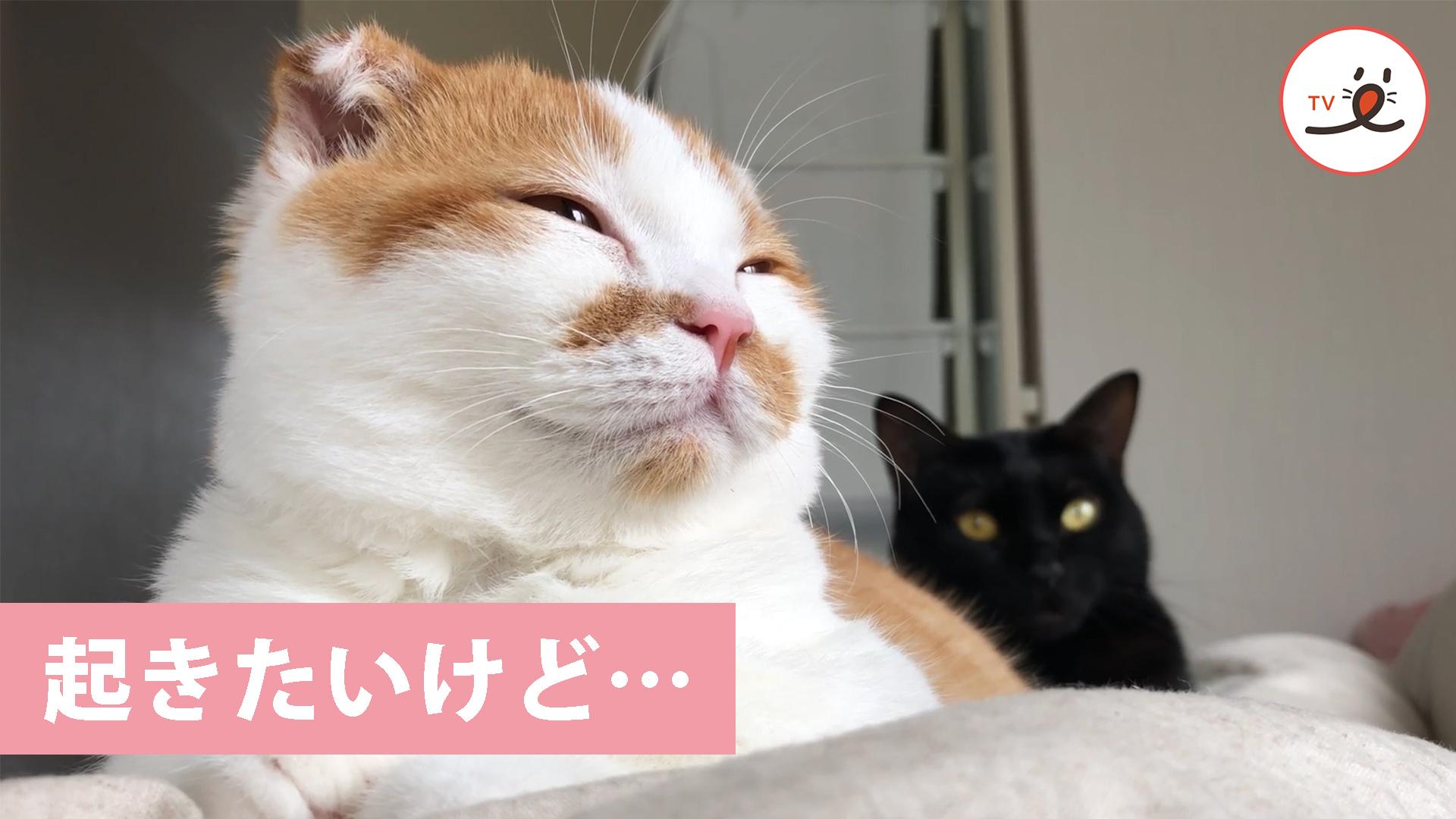 カワイすぎて遅刻しそう😻💦 寝起きの飼い主さんの上に乗る猫ちゃん💕