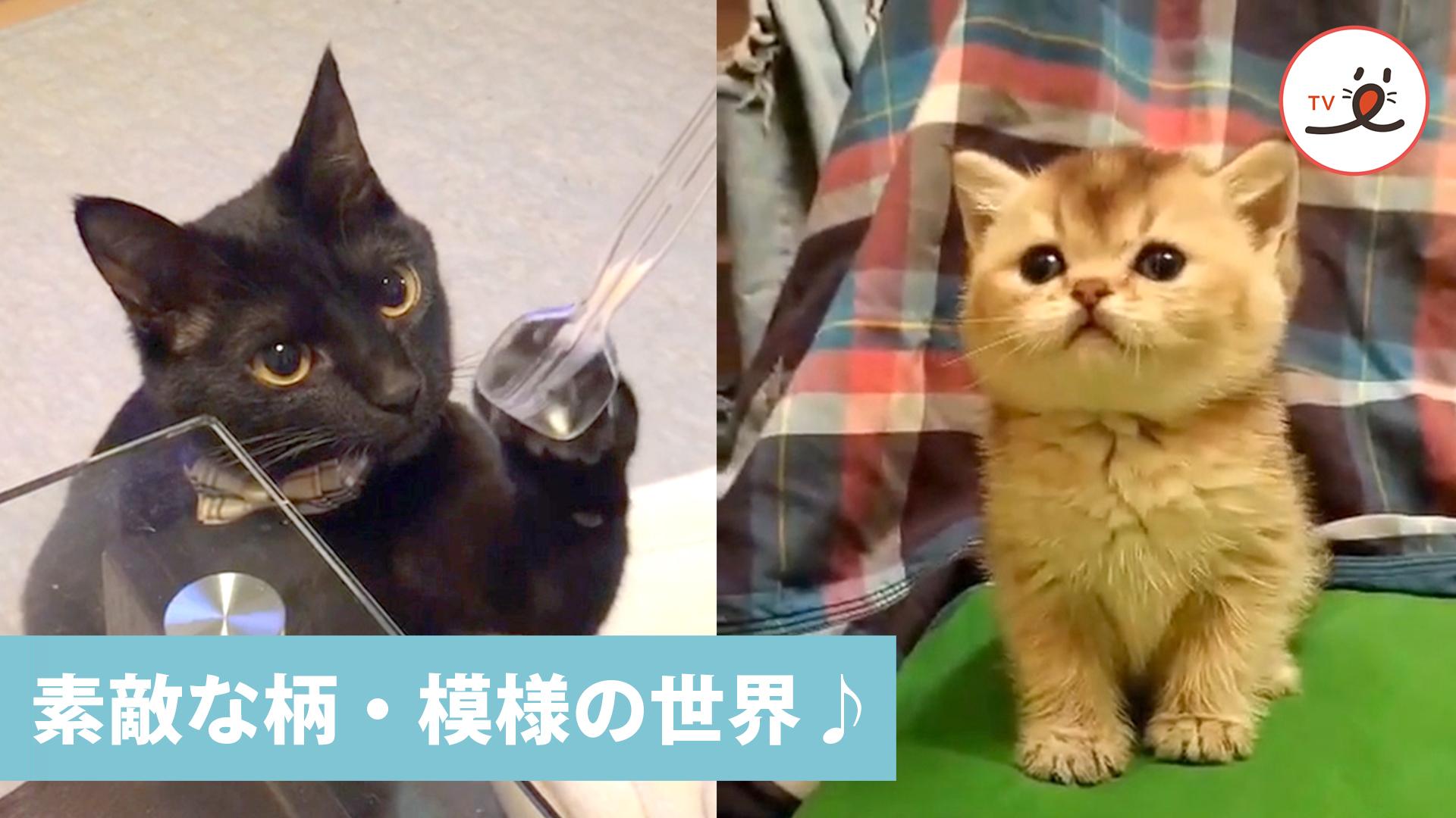 意外と奥が深い🤔 魅力的な猫の「柄・模様の世界💕」