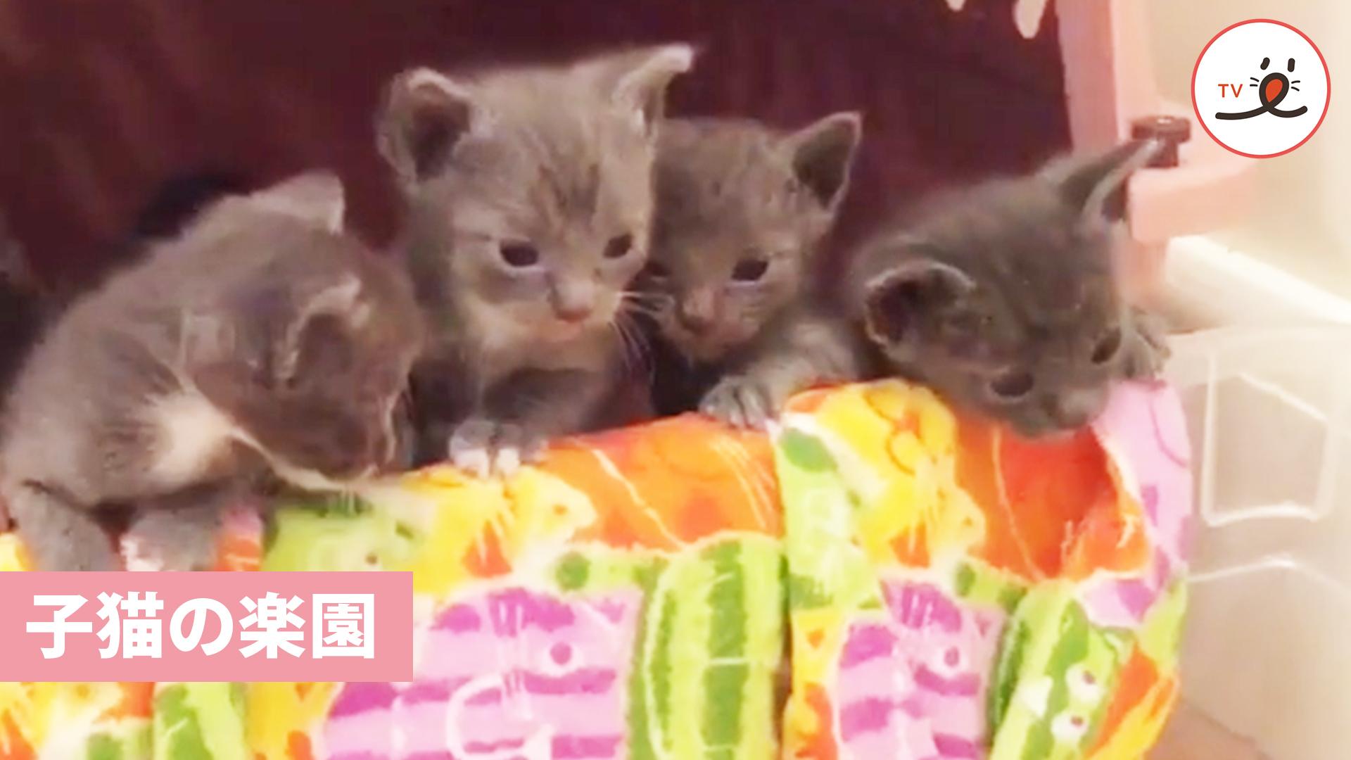 初めてお外へ出かける子猫ちゃんたち