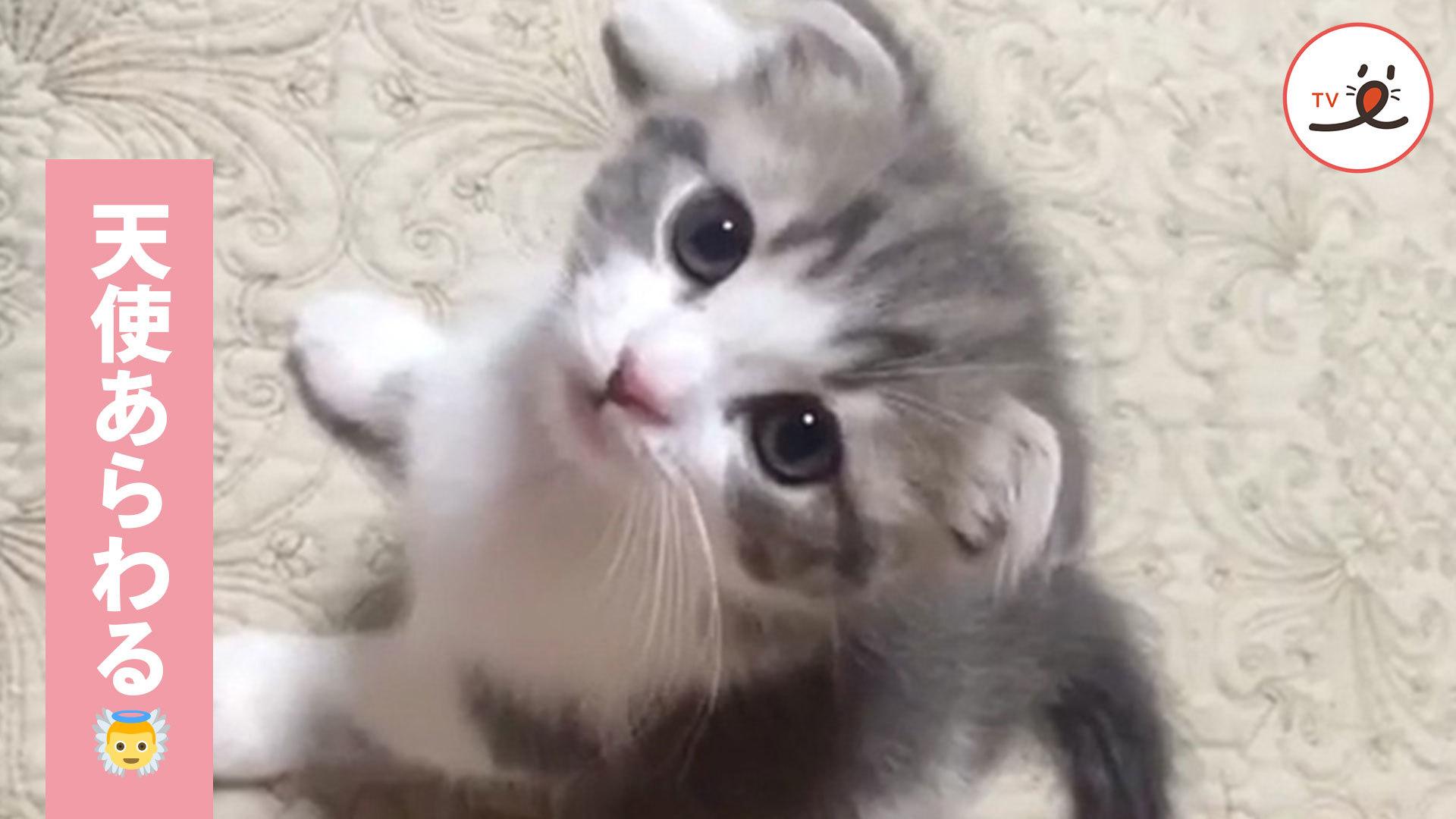 天使すぎる子猫ちゃん👼 こんな子に見つめられたい…💕